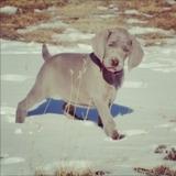 Super mega adorable puppy photo